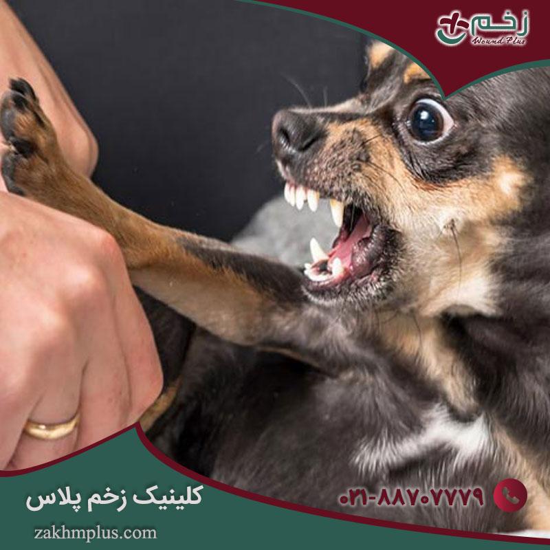اصول مراقبتی زخم ناشی از گاز حیوانات